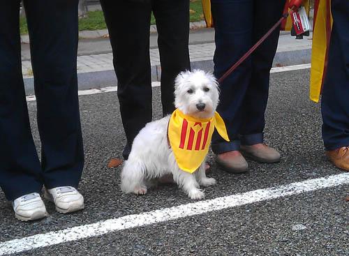perro-catala