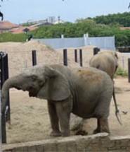 elefante copia copia