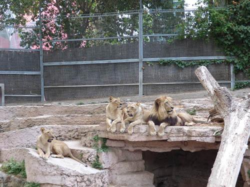 leao_zoo