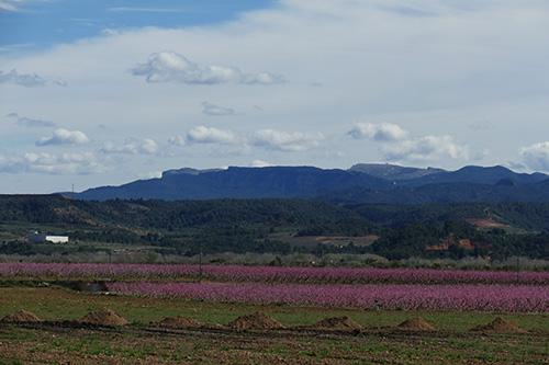 campo-de-pessegueiros-catalunha
